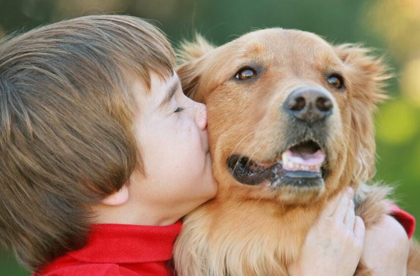 Роль воспитателей в формировании нравственных качеств у детей старшего дошкольного возраста посредством знакомства с животным миром